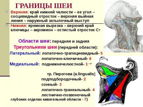 Анатомия на шията на човек - Болки в ставите