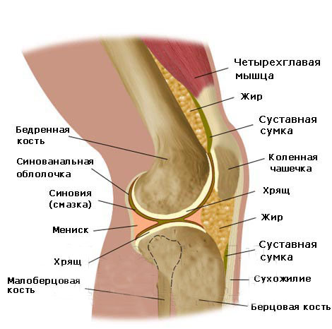 Ревматизъм и Ревматоиден артрит | orientandoo.com