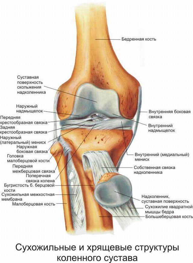 Болки в ставите на крака след удар в таза