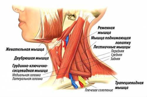 Причините за болки във врата | orientandoo.com