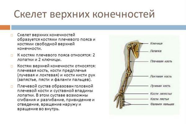 Счупвания на ръката - Болки в ставите