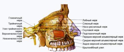 Главоболие и възпаление на лицевите нерви: възможности за..