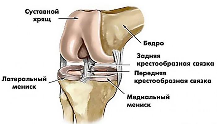 Боли ме крака под коляното