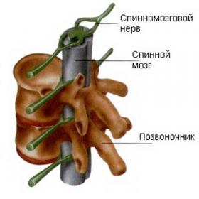 Болка в гърба, притиснат нерв - Болки в ставите
