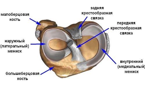 Болка в коляното : причини и лечение   Компетентно за здравето на Move&Flex