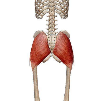 Анатомични и функционални особености на кръста - Болки в..