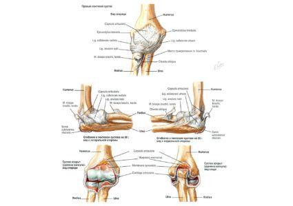 Анатомия на лакътната става - Болки в ставите