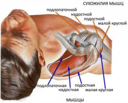 Болка в рамото при плувци (рамо на плувец) | Спорт orientandoo.com