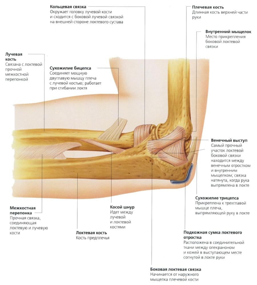 Причини за контур на лакът и лечение - Болки в ставите