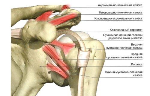 Болка в рамото